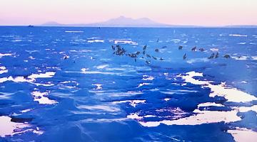 国後島を望む羅臼、流氷ネイチャークルーズ 羅臼流氷クルーズも楽しむ 冬の道東 大自然の旅【6日間】