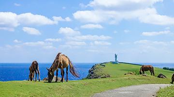 台湾までわずか111キロ日本の最西端へ 謎の与那国島 神秘の旅【5日間】